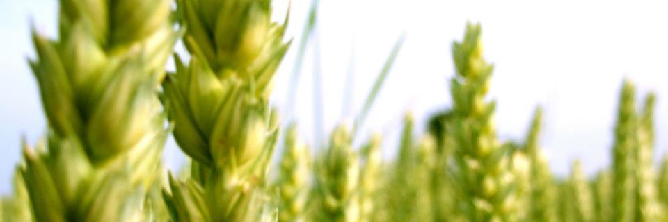 Conférence Livre Blanc Céréales 10 Septembre 2020 - conférence en ligne